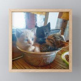 Three Kitties One Bowl Framed Mini Art Print