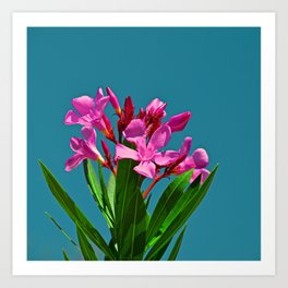 Pretty in pink under turquoise sky Art Print