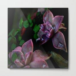 Petal Dewdrops on Cote d'Azur Flowers Metal Print