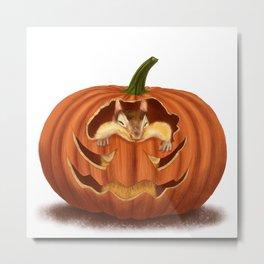 Chipmunk Eats Pumpkin Metal Print