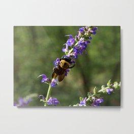 Bumble Bee on purple Metal Print