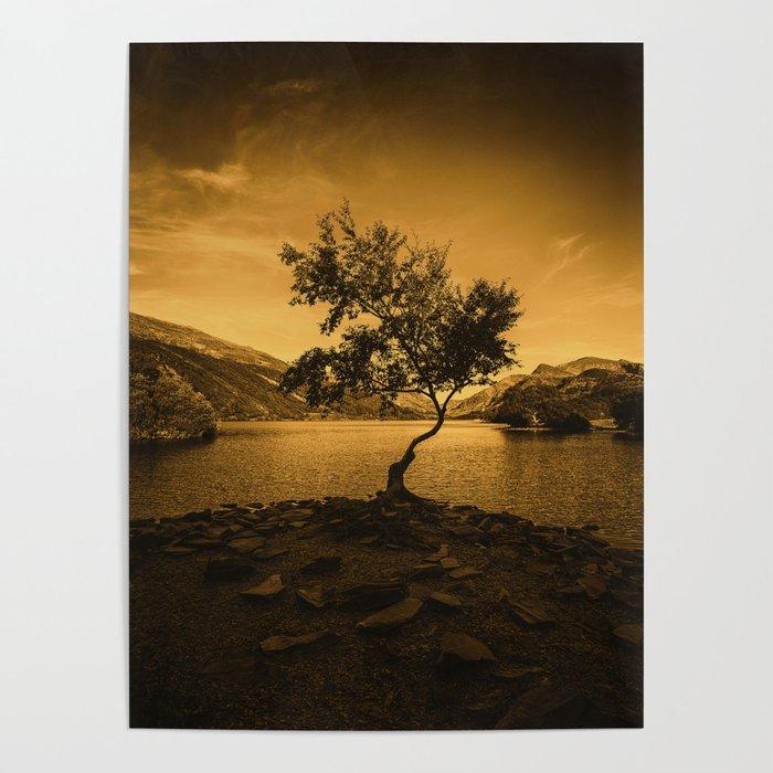 Tree at Llyn Padarn Poster