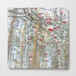 Winter Rowan and birchs Metal Print
