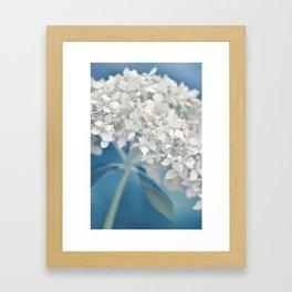 Beautiful White Hydrangea 276 Framed Art Print