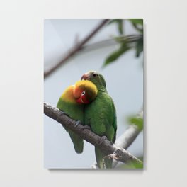 Parrots Being Affectionate Metal Print