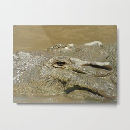 Crocodile in Costa Rica Metal Print