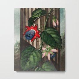 Robert John Thornton - The Winged Passion-Flower Metal Print