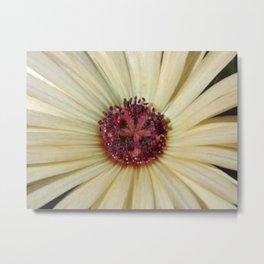 livingstone daisy Metal Print