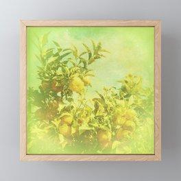 Mandarine Tree Framed Mini Art Print