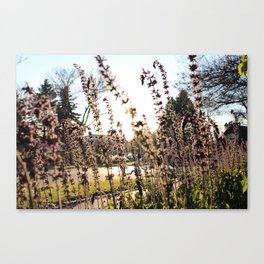 Flowers in Frankenmuth Canvas Print