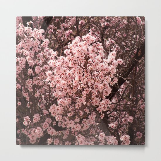 Spring Blossoms - II Metal Print
