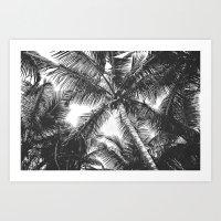 Palm Trees Black and White Art Print