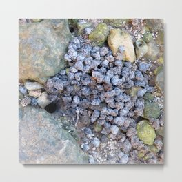 Watercolor Poop, Fiddler Crab 01, Gulf Island Beach, Florida Metal Print
