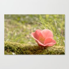 Morning Flower Canvas Print