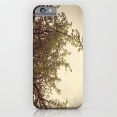 Sunlight & Branches Slim Case iPhone 6s