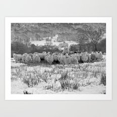 Sheep on the Brecon Beacons.Wales. Art Print