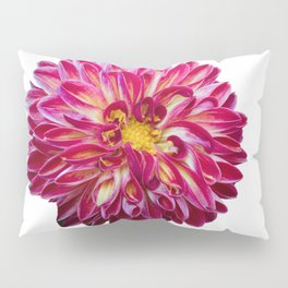 dahlia in spring season Pillow Sham