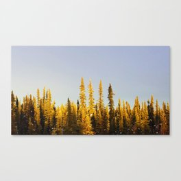 Midwinter Treeline Alaska Canvas Print