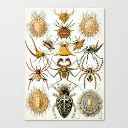 Ernst Haeckel Kunstformen der Natur Arachnida Plate, Spiders Canvas Print