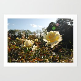 Rose Garden Sunshine Art Print