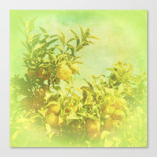 Mandarine Tree Canvas Print