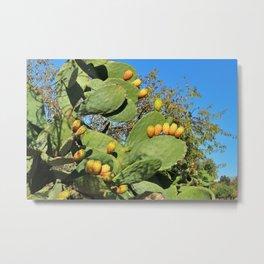 Prickly pear cactus plant with yellow orange ripe fruit Metal Print
