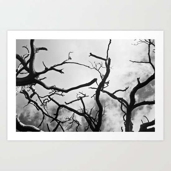 Spines of the Sky Art Print