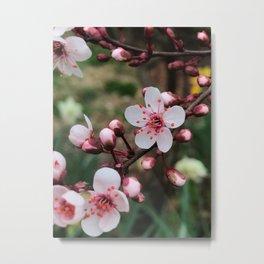 Cheery Cherry Plum Metal Print