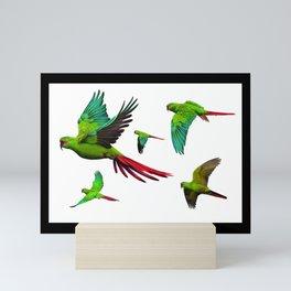 Slender-billed Parakeet (Enicognathus leptorhynchus) Mini Art Print