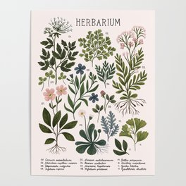 Herbarium ~ vintage inspired botanical art print ~ white Poster