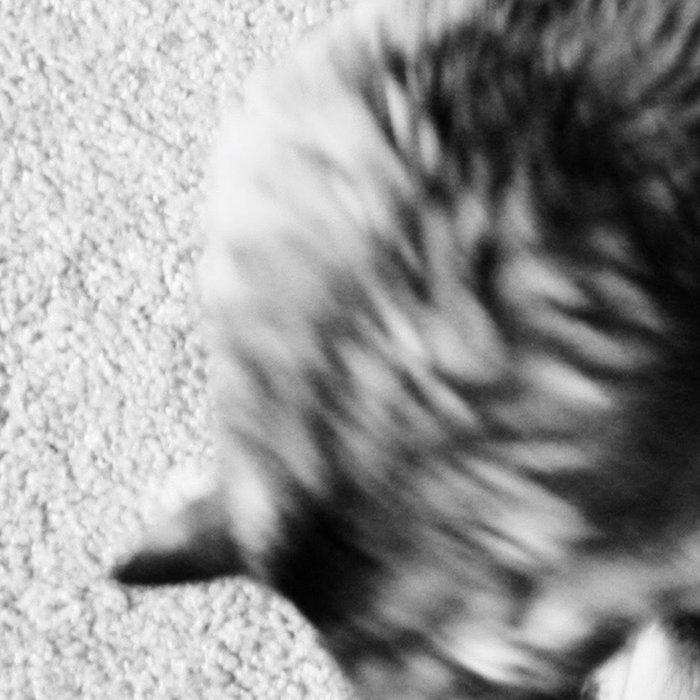 Aesthetic Black And White Cat 2 Leggings