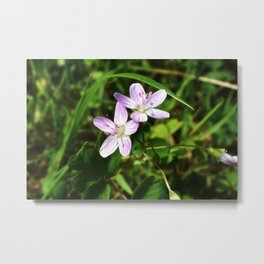 Spring Beauty 04 Metal Print