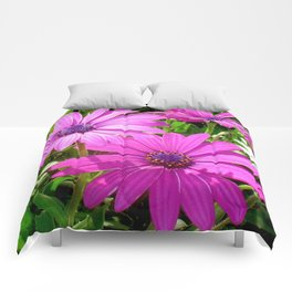 Purple And Pink Tropical Daisy Flower Comforters