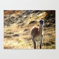 llama Canvas Prints featuring Llama by Tia_Mala_Onda
