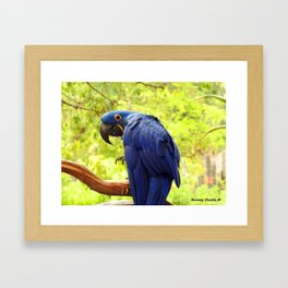 Pretty Boy Framed Art Print
