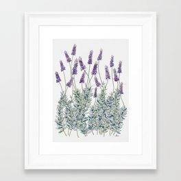 Lavender, Illustration Framed Art Print