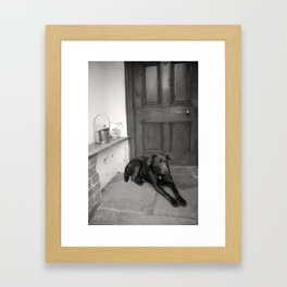 Chocolate Lab in the porch Framed Art Print
