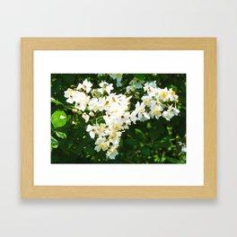 A Bundle of Jasmine Framed Art Print