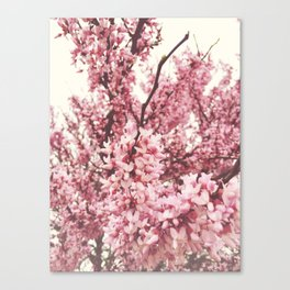 hazy bloom Canvas Print