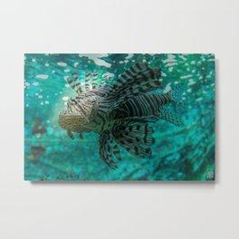Tiger Fish Metal Print