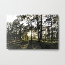 Forest Sunset # 15 Metal Print