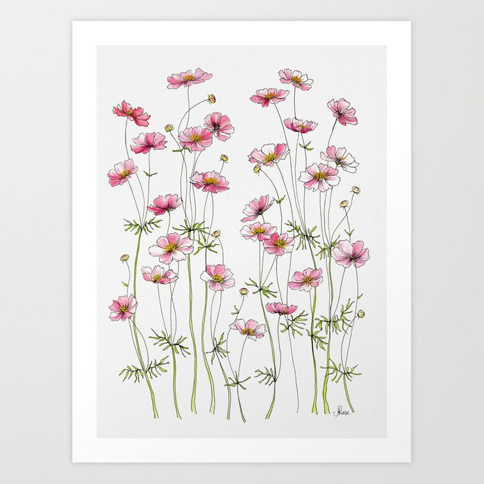 Pink Cosmos Flowers Kunstdrucke