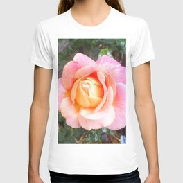 Chicago Peace Rose T-shirt