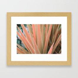 Pink aloe Framed Art Print