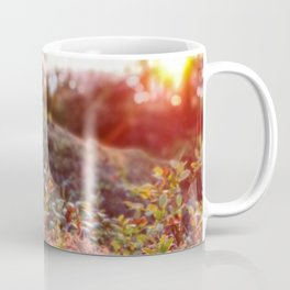 Evening glow in the forest Coffee Mug