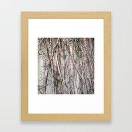 Climbing Branches Framed Art Print