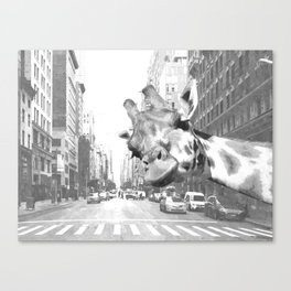 Black and White Selfie Giraffe in NYC Canvas Print