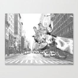 Black and White Selfie Giraffe in NYC Canvas Print