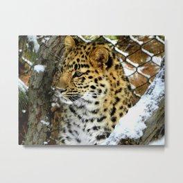 Amur Leopard Cub in the Snow Metal Print