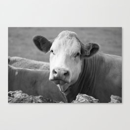 The laughing cow Canvas Print